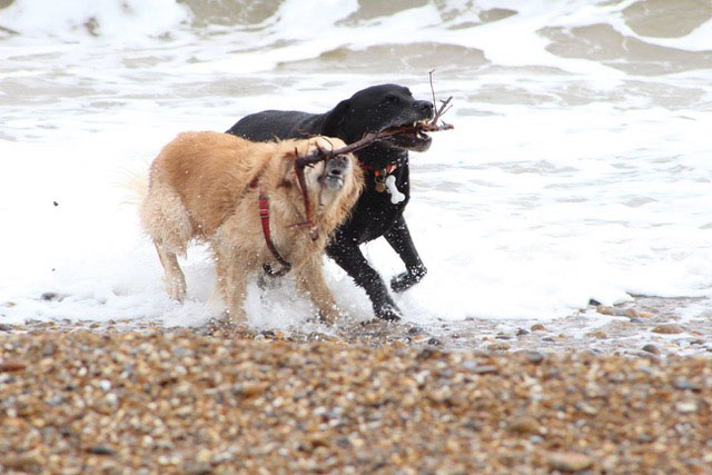 Dogs on a Suffolk beach photo