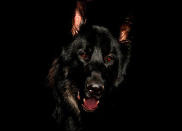 Black Shuck - SO Suffolk